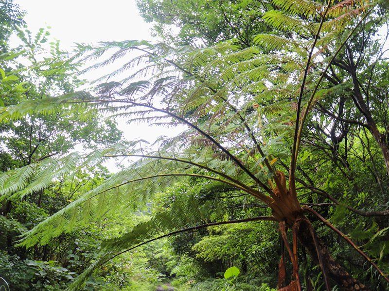 フナンギョの滝