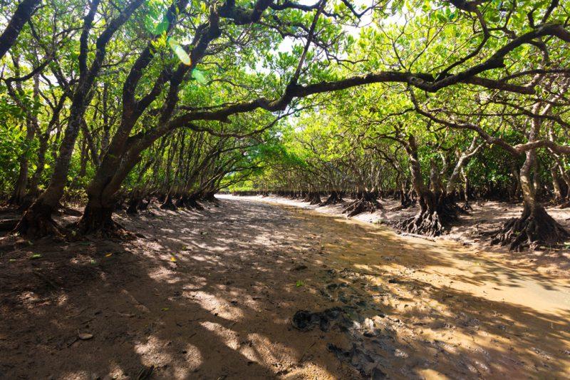 黒潮の森 マングローブパーク